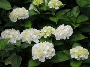 flower150727