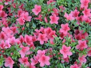 flower150730