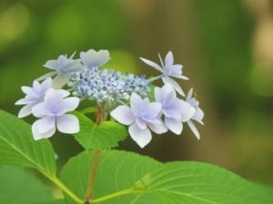 flower-kj