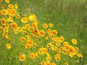 flower150810