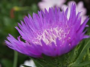 flower150821