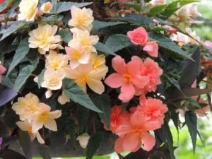 flower150802-2