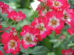 flower150804