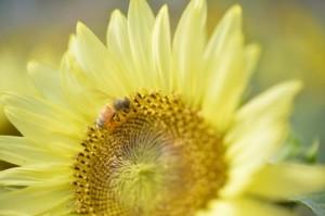 flower150808