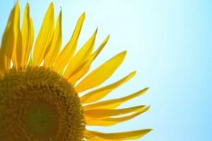 flower150811