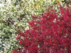 flower150824-2
