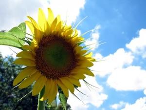 flower150828