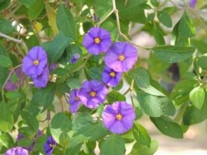 flower150912