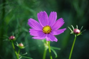 flower150916