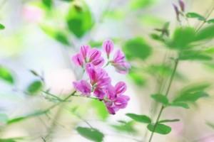 flower150927