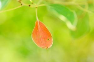 leaf150904
