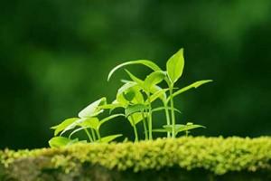 leaf150924