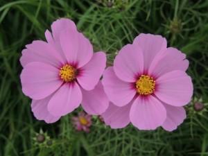 flower151003