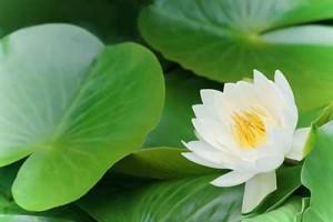 flower151004-1