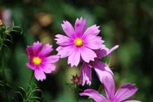 flower151004-2
