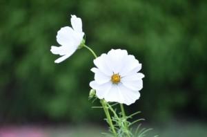 flower151010