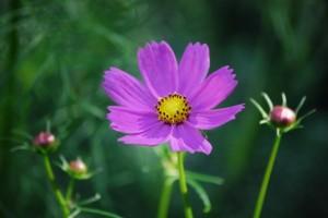 flower151014