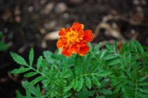 flower151017