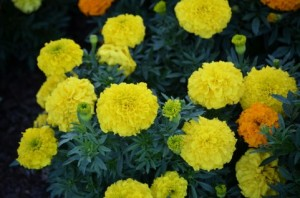 flower151020