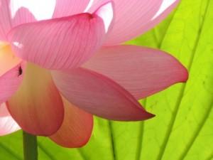 flower151115
