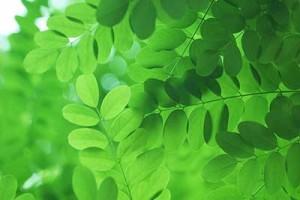 leaf151114