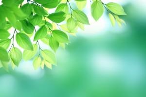leaf151205