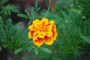 flower151203