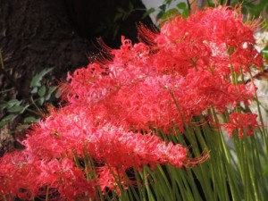 flower151211