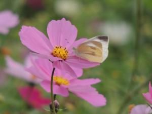 flower151226