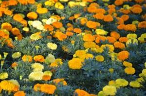 flower151214