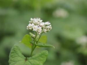 flower151217