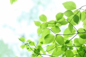 leaf151220