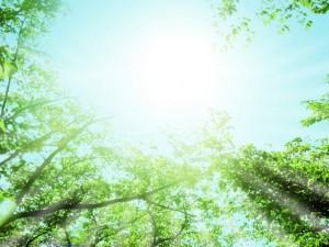 tree151230