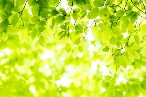 leaf160124