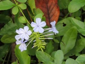 flower160123