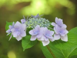 flower160129