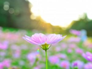 flower160131-1