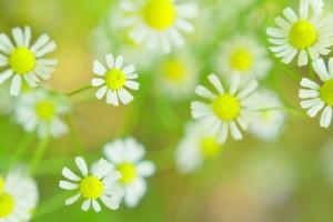 flower160216
