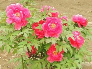 flower160223