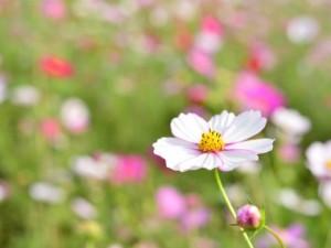 flower160205