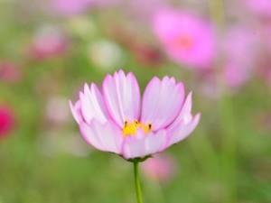 flower160207