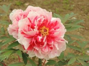 flower160213