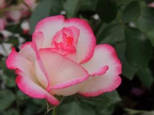 flower160217