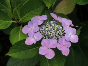flower160225-2