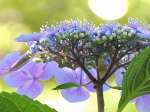 flower160225