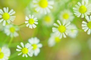 flower160228-2