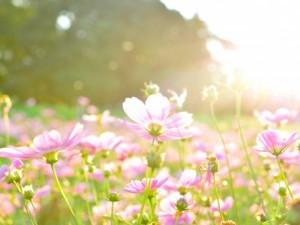 flower160228
