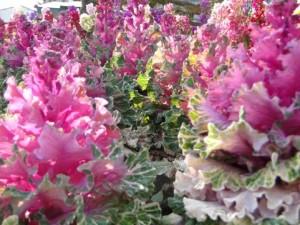 flower160328