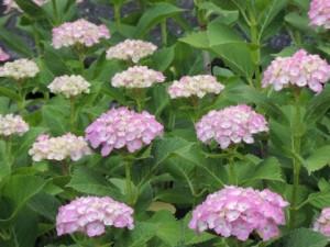 flower160303
