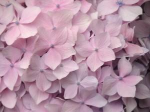 flower160305